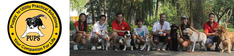 Dog agility class in Singapore