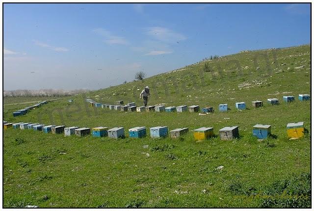 Η τοποθέτηση των μελισσιών μας: Γράφει ο μελισσοκόμος Κώστας Μυγδανάλευρος...