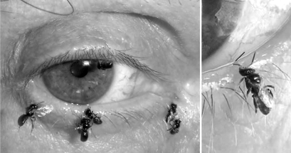 Feed insects with your tears