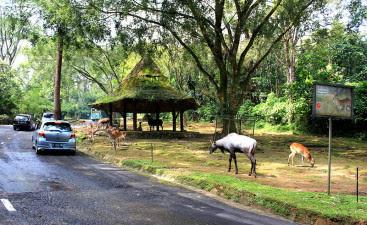 Wisata Taman Safari Bogor Jawa Barat