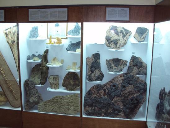Μουσείο φυσικής ιστορίας που χρονολογείται από τον άνθρακα