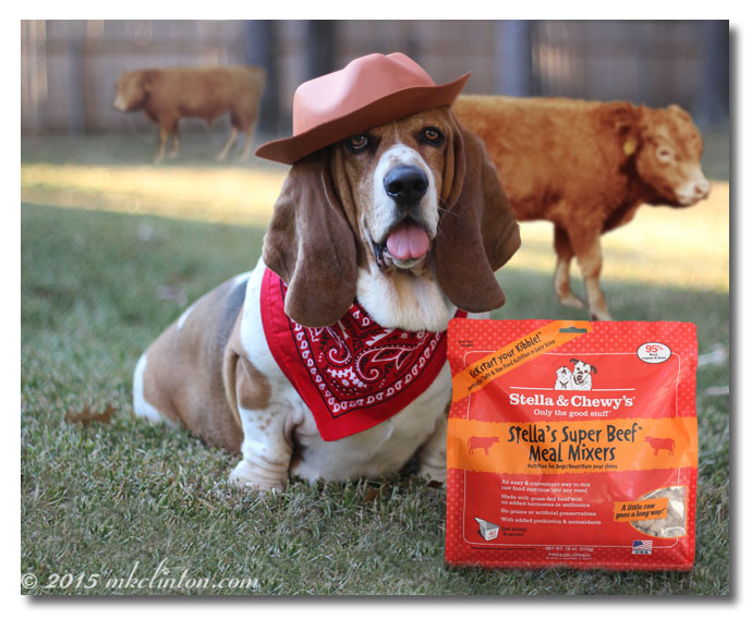 Basset and Stella & Chewy's Meal Mixers with cows in backgound