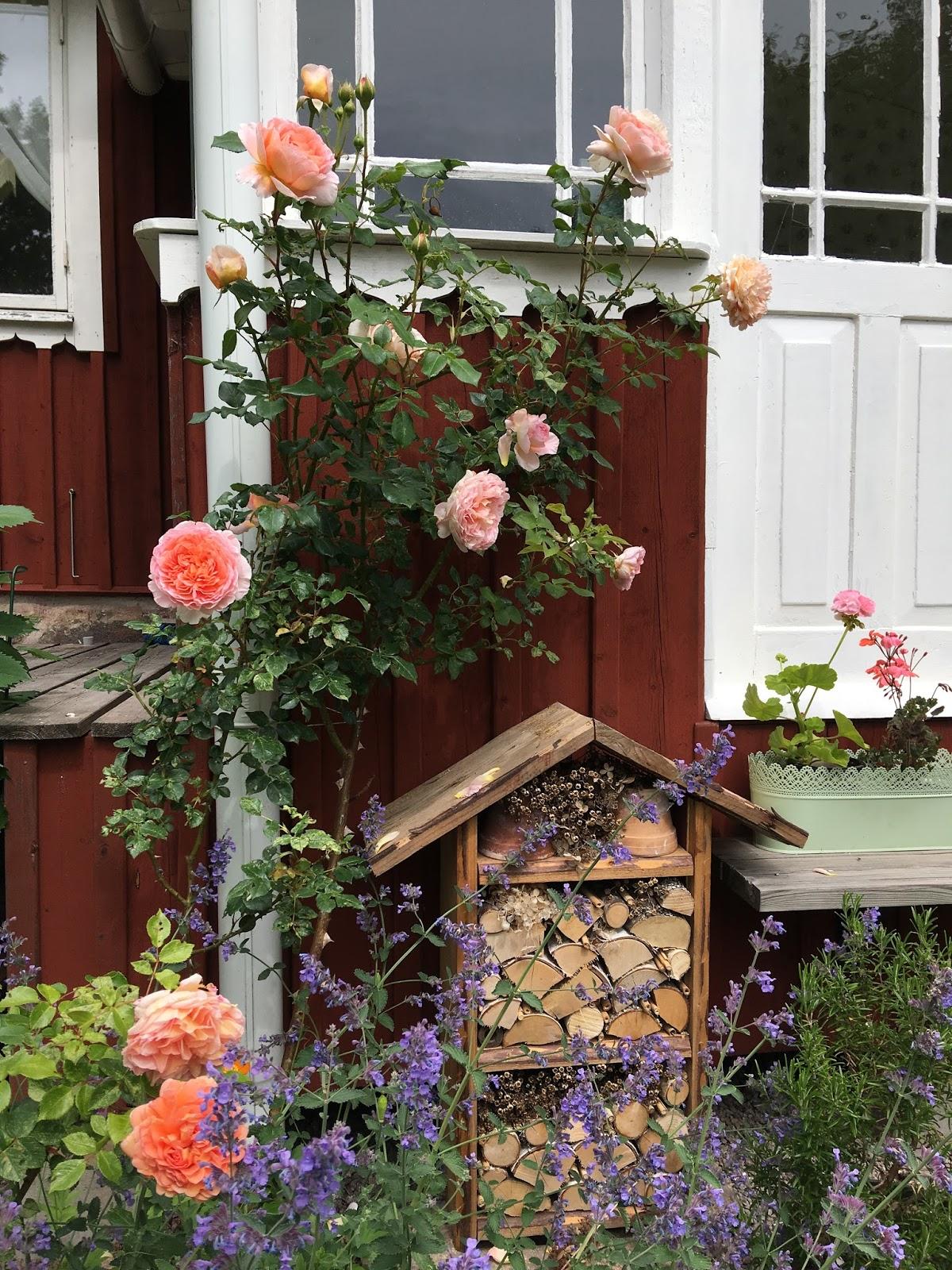 Min trädgård Ogräs eller inte