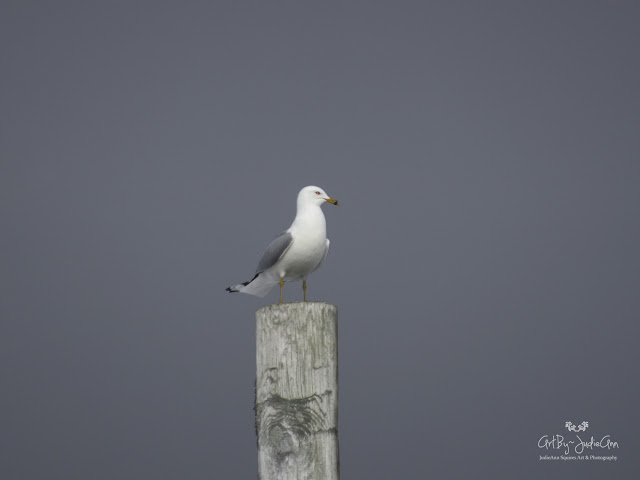 Gull On Pole Photography Print
