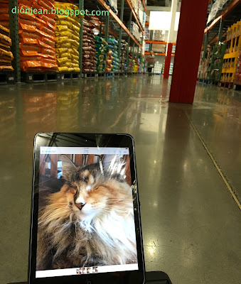 Photo of Lucy the cat in the pet aisle at Costco