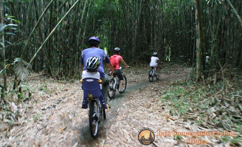 Photos Of Bamboo Forest Bali Countryside Cycling Tour Tracks