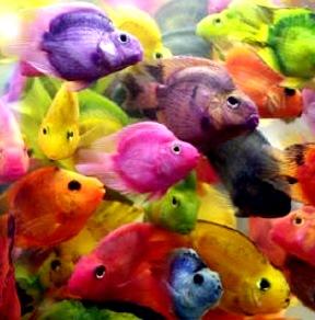 Foto de peces en el agua y de distintos colores