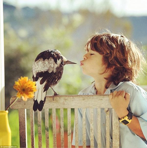 Cô chim thân thiện được ăn cùng bàn, ngủ cùng giường với chủ nhân