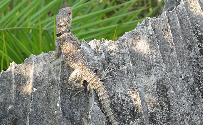 Xvlor Tsingy de Bemaraha National Park