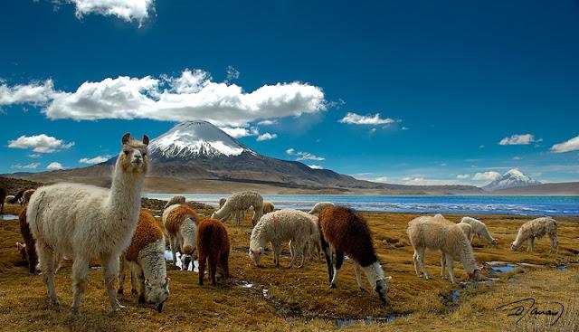 www.viajesytursmo.com.co825x498