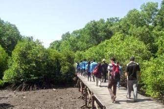 Wisata Pendidikan Mangrove