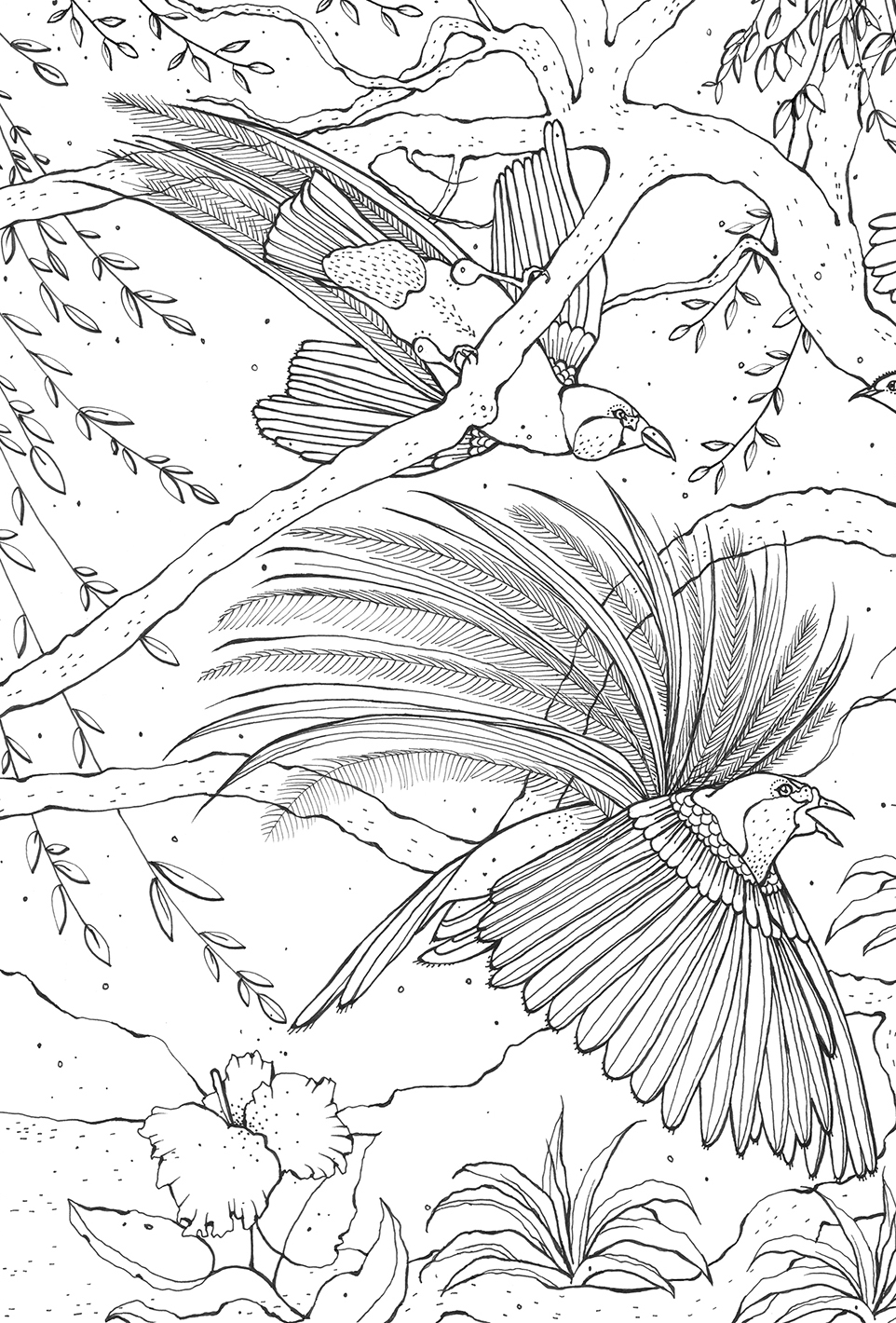 Kerry Lemon Birds Of Paradise Colouring Book