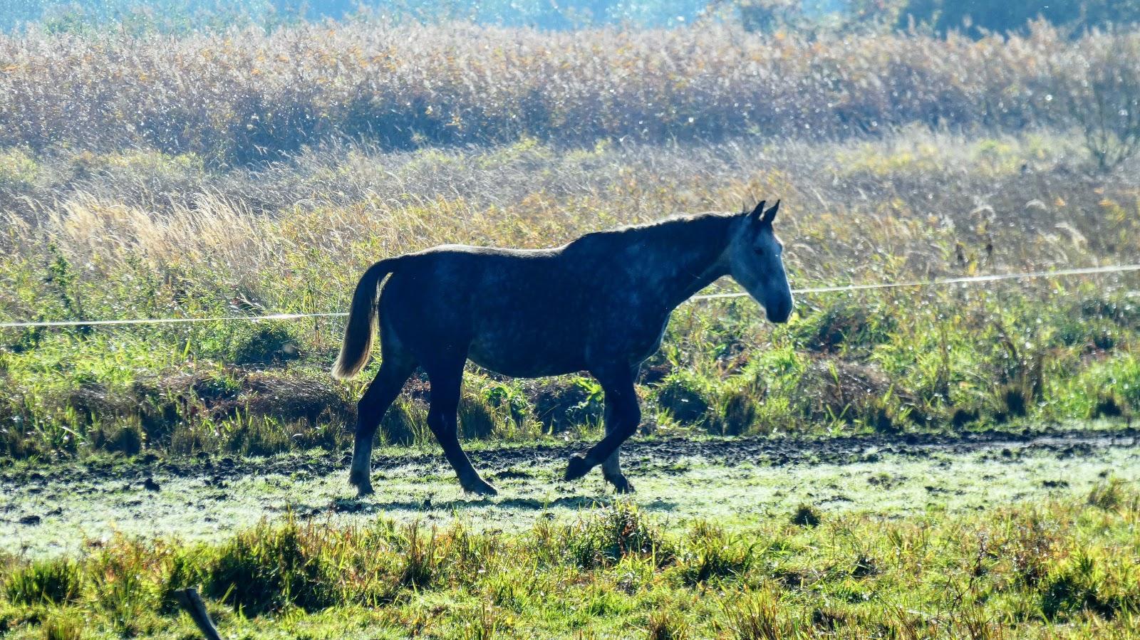 Siadło Dolne koń