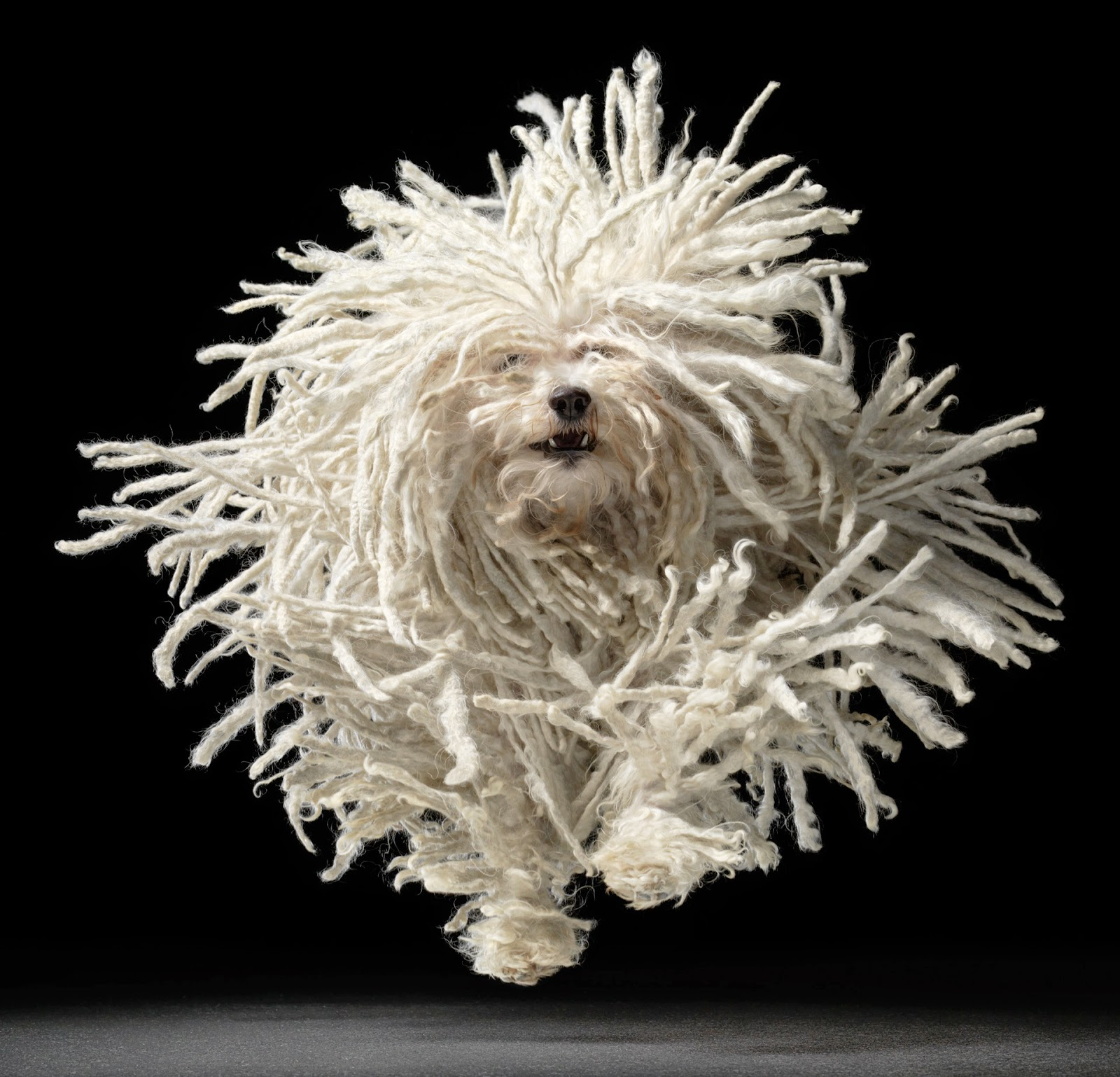 Design animal portraits by tim flach for Lavori di troupe londinese