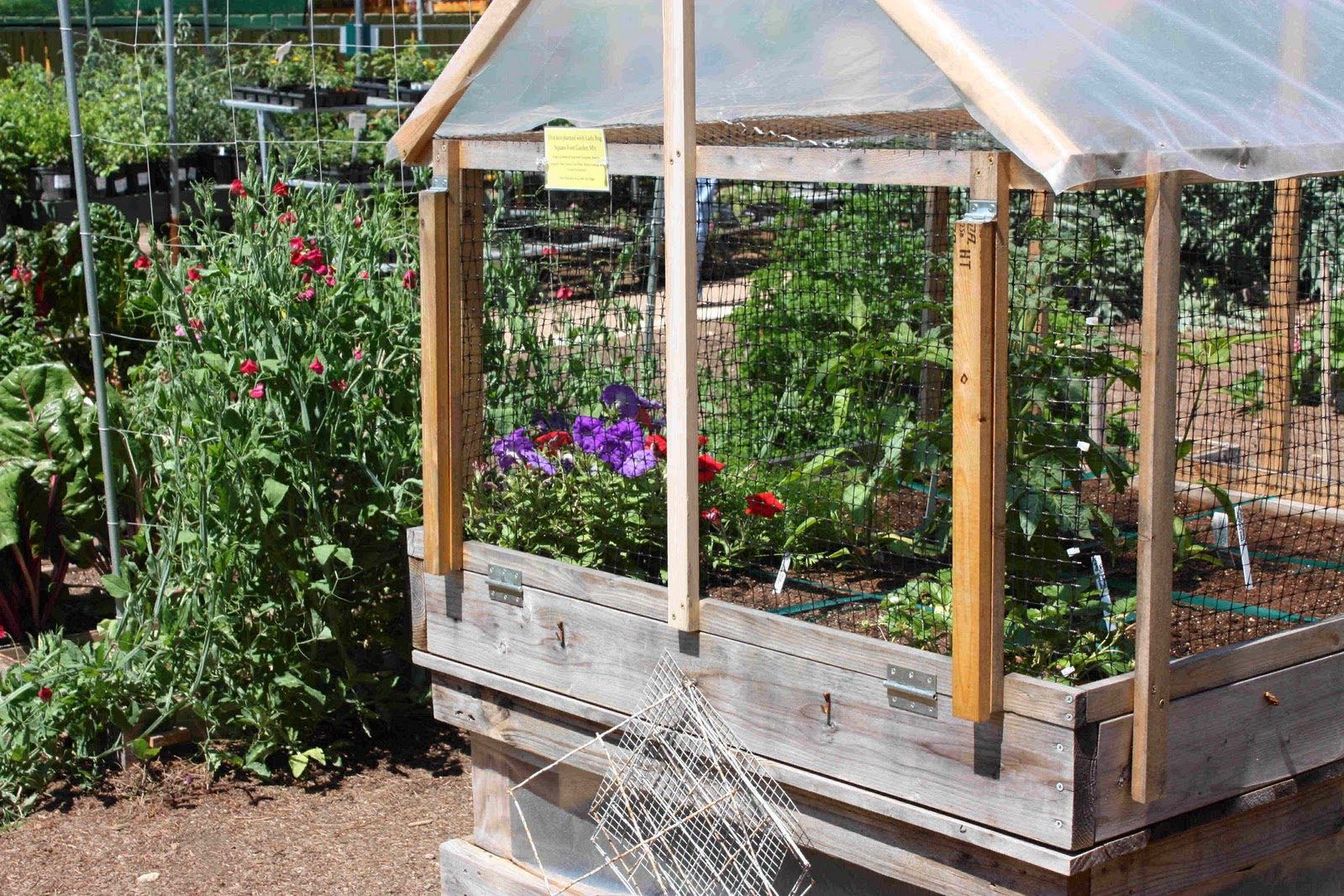 Musings from the Texas Hill Country: Square Foot Gardening ... on Square Patio Ideas id=44244