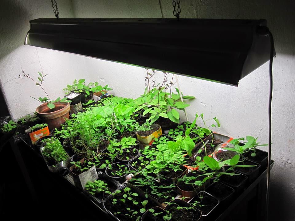 Vekstlys planter