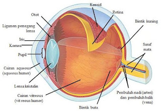 Materi Lengkap Alat Optik: Mata, Cacat Mata dan Rumusnya