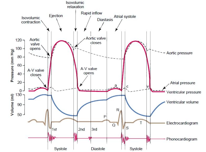 Abnormalities In The Cardiac Cycle