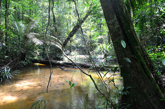 5 lieux incontournables à découvrir en Guyane