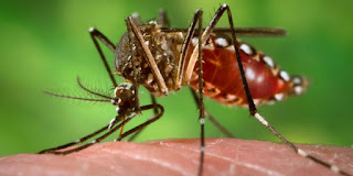 Virus del Zika, Sintomas del zika, Tiempo de incubacion del virus zika, como prevenirse del zika, tratamiento del virus del zika, todo sobre el Zika,