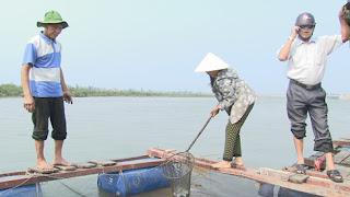 Người dân thu gom cá chết tại các lồng nuôi trên vùng biển Vũng Áng - Ảnh: Nguyên Dũng