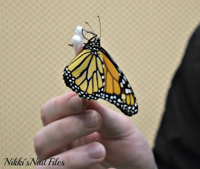 butterfly; butterfly on hand