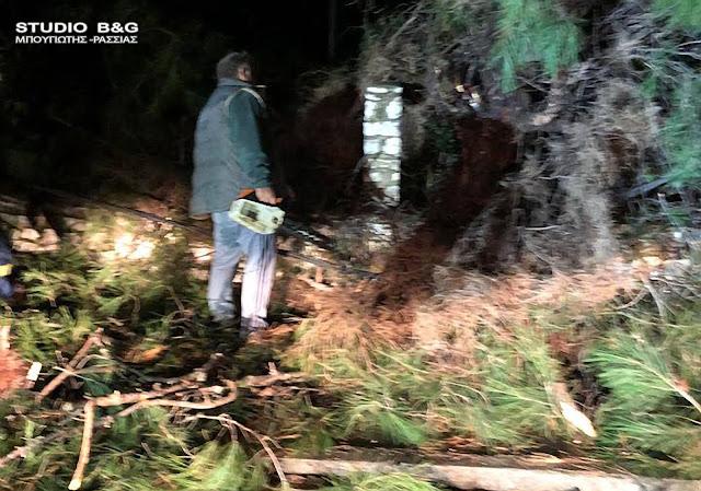 Πτώση δέντρου στο Άργος - Κόπηκαν καλώδια της ΔΕΗ (βίντεο)