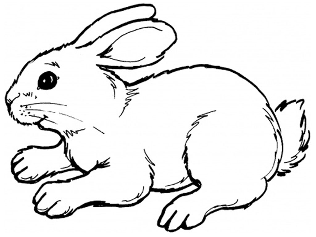 Line Drawing Easter Bunny : Rabbits coloring pages realistic