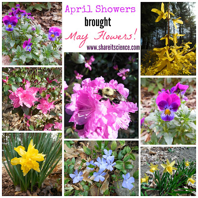 http://www.shareitscience.com/2015/05/glimpse-of-garden-week-6-april-showers.html
