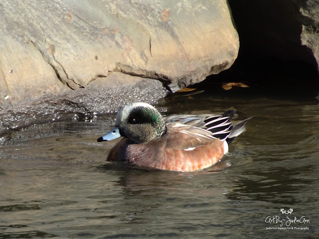 Duck with blue beak photo