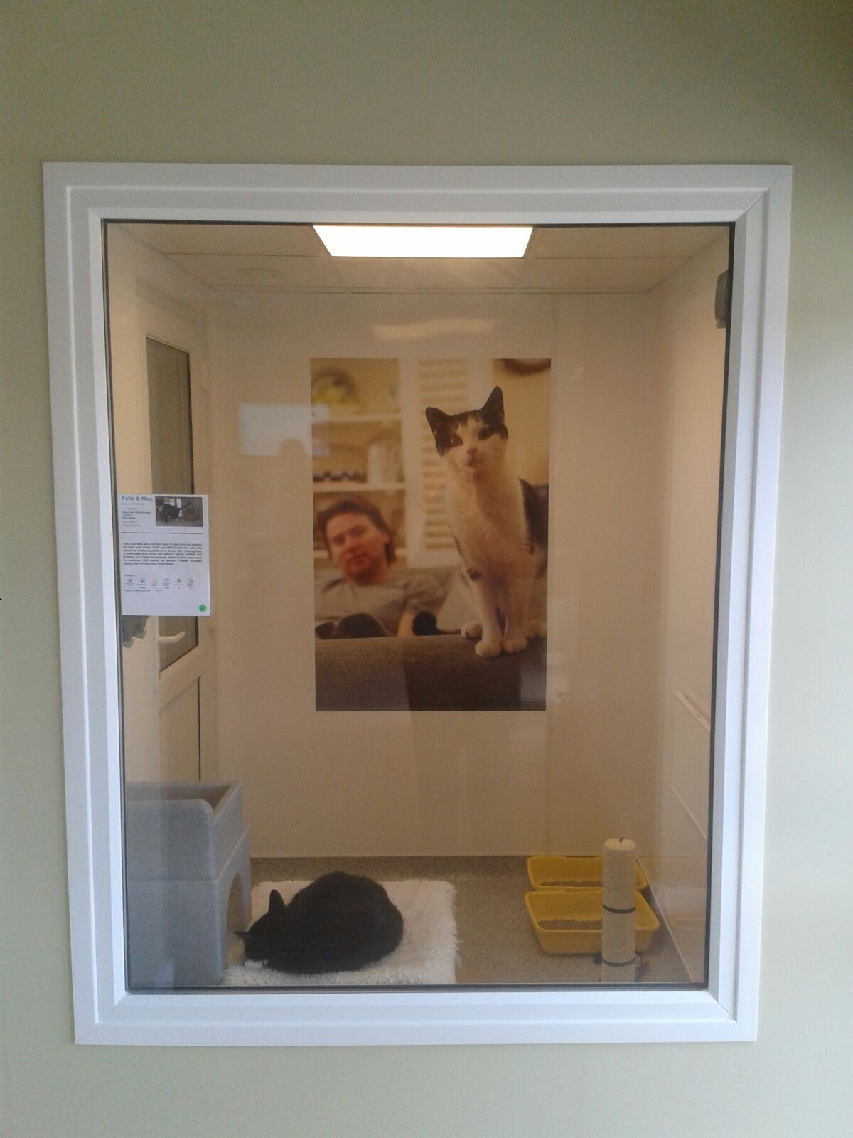 Taunton And Wellington Cats Protection