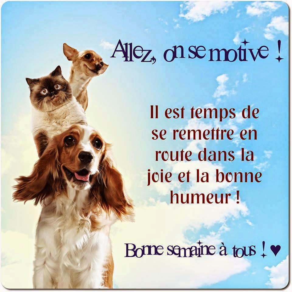 Citations Option Bonheur Bonjour Avec Animaux