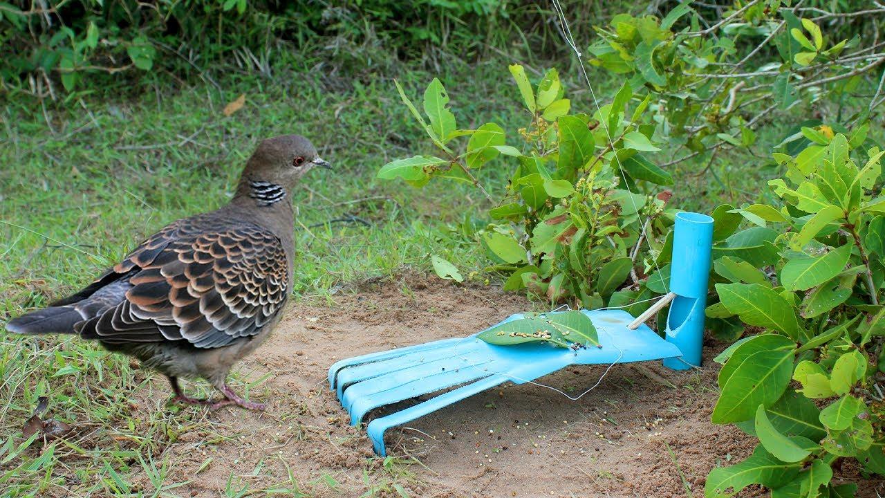 Plastik boruları da kuş tuzağı olarak kullanabilirsiniz.