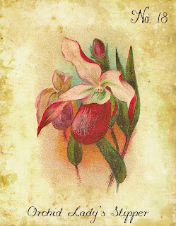 botanical flower orchid artwork illustration printable art image