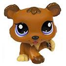 Littlest Pet Shop Petriplets Bear (#1556) Pet