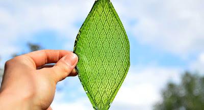 Cèl·lules solars que capten CO2 i llum per produir combustible per fotosíntesi