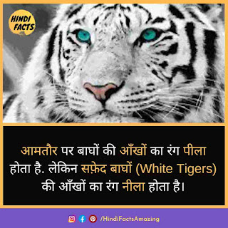 tiger in hindi