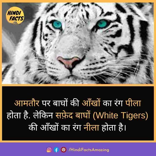 Tiger in Hindi - बाघ की जानकारी और 66 रोचक तथ्य