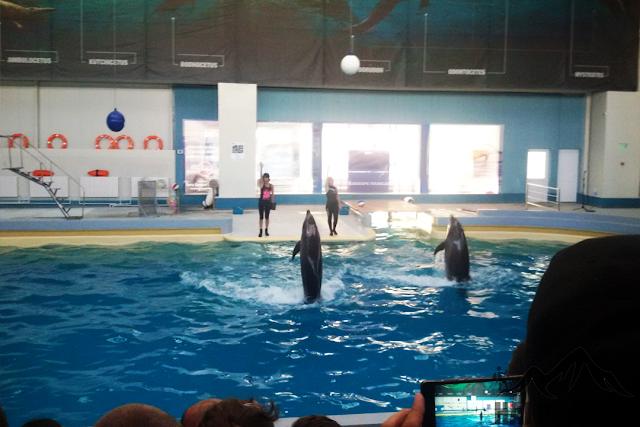 delfinii Ni-Ni și Chen-Chen în acțiune