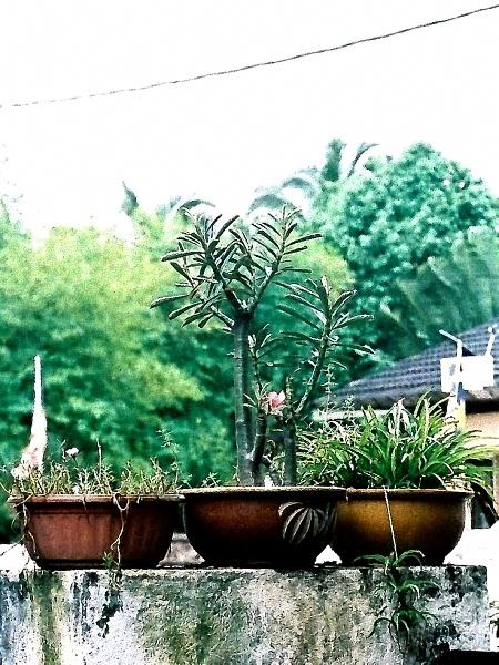 In the Garden 01