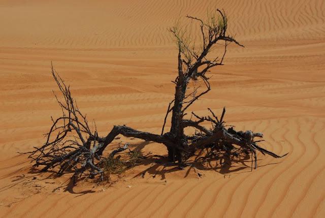 """Photos by Ahmed AL-Kindy """" """"Wahiba Sands""""35.JPG"""