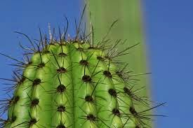 L'huile de cactus l'élixir de beauté