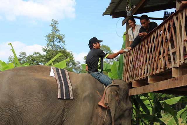 Bénédiction pour l'éléphant rescapé