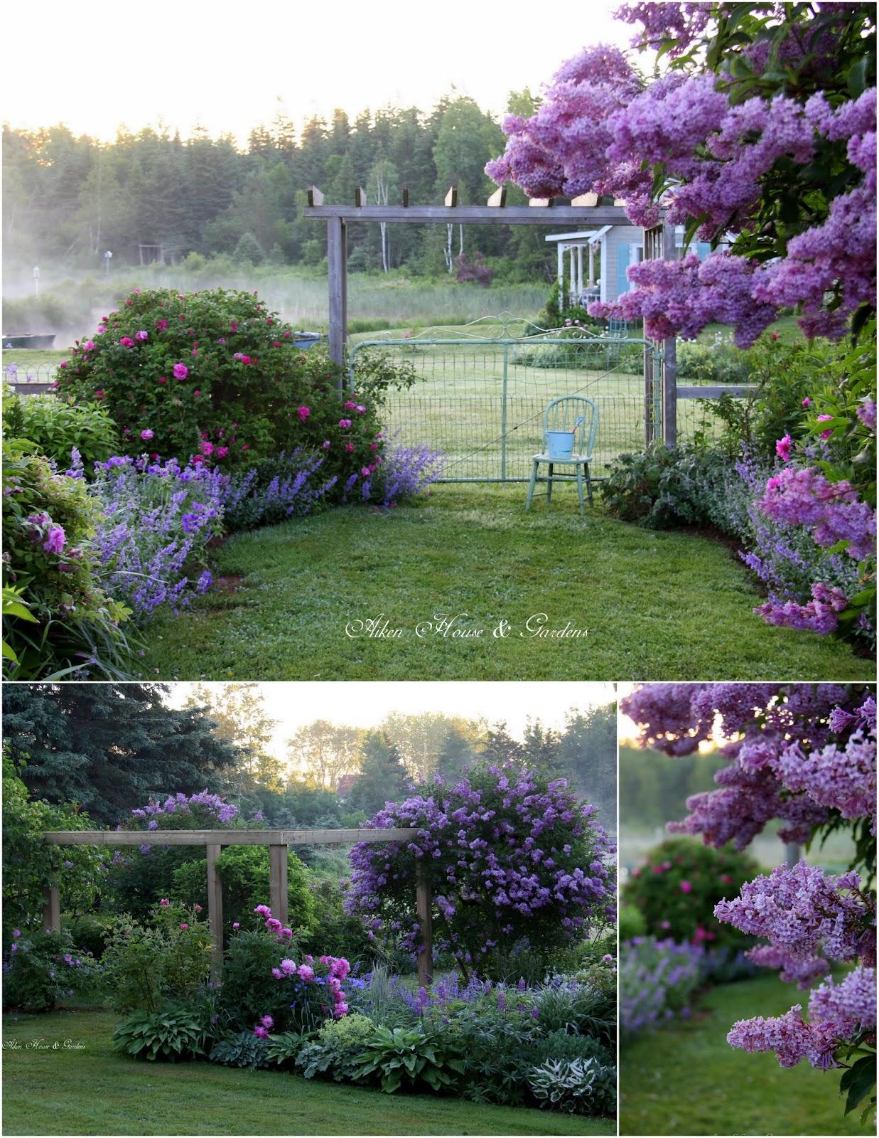 Aiken house gardens a misty morn in the garden for Aiken house