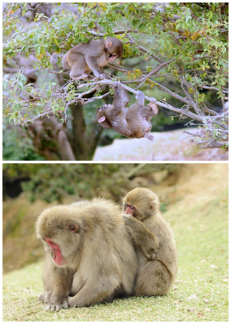 Kyoto travel with kids Iwatamaya Monkey Park