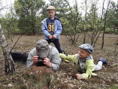 grzyby 2017, grzyby w maju, grzyby na Pustyni Błędowskiej, pierwsze maślaki, maślaki 2017