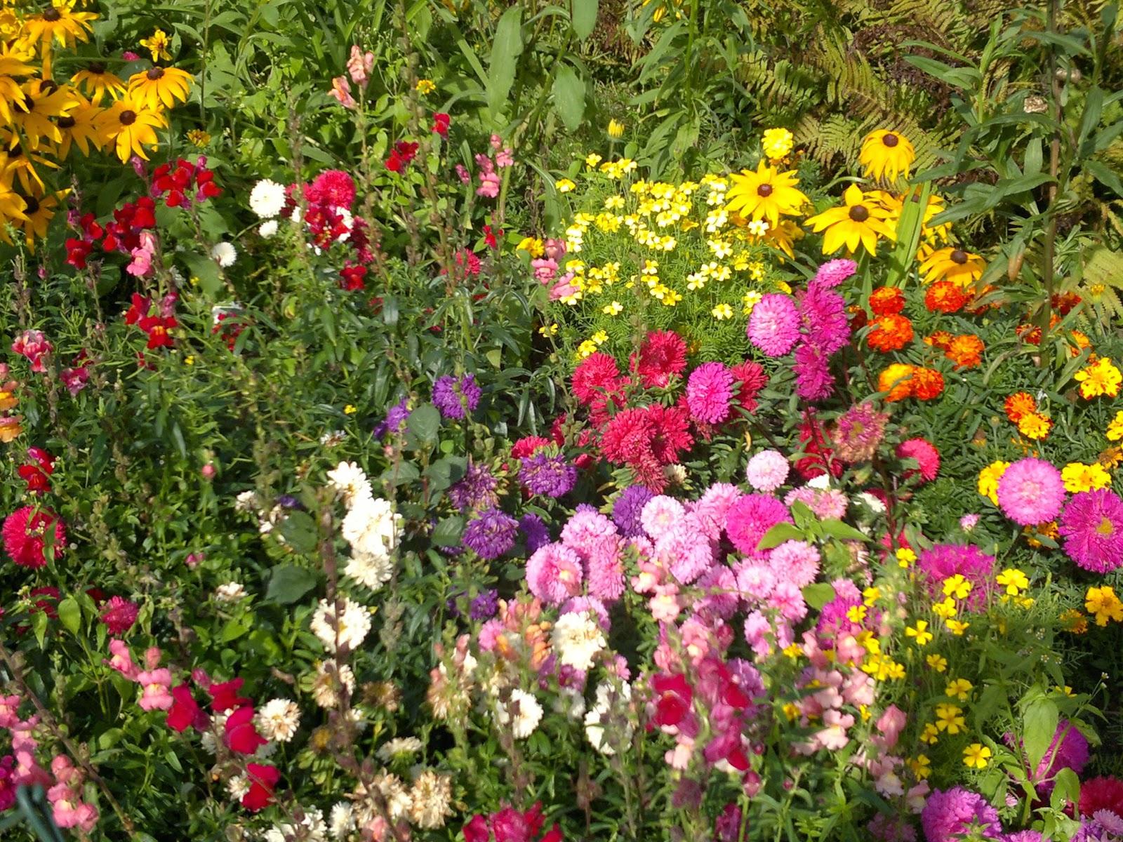 86841bfd637b57 ten ogród to moja miłość...miłość którą mam w sobie, która wypływa i  rozświetla innym życie... wtedy jestem w każdym ogrodzie sobą i czuję się  dobrze.
