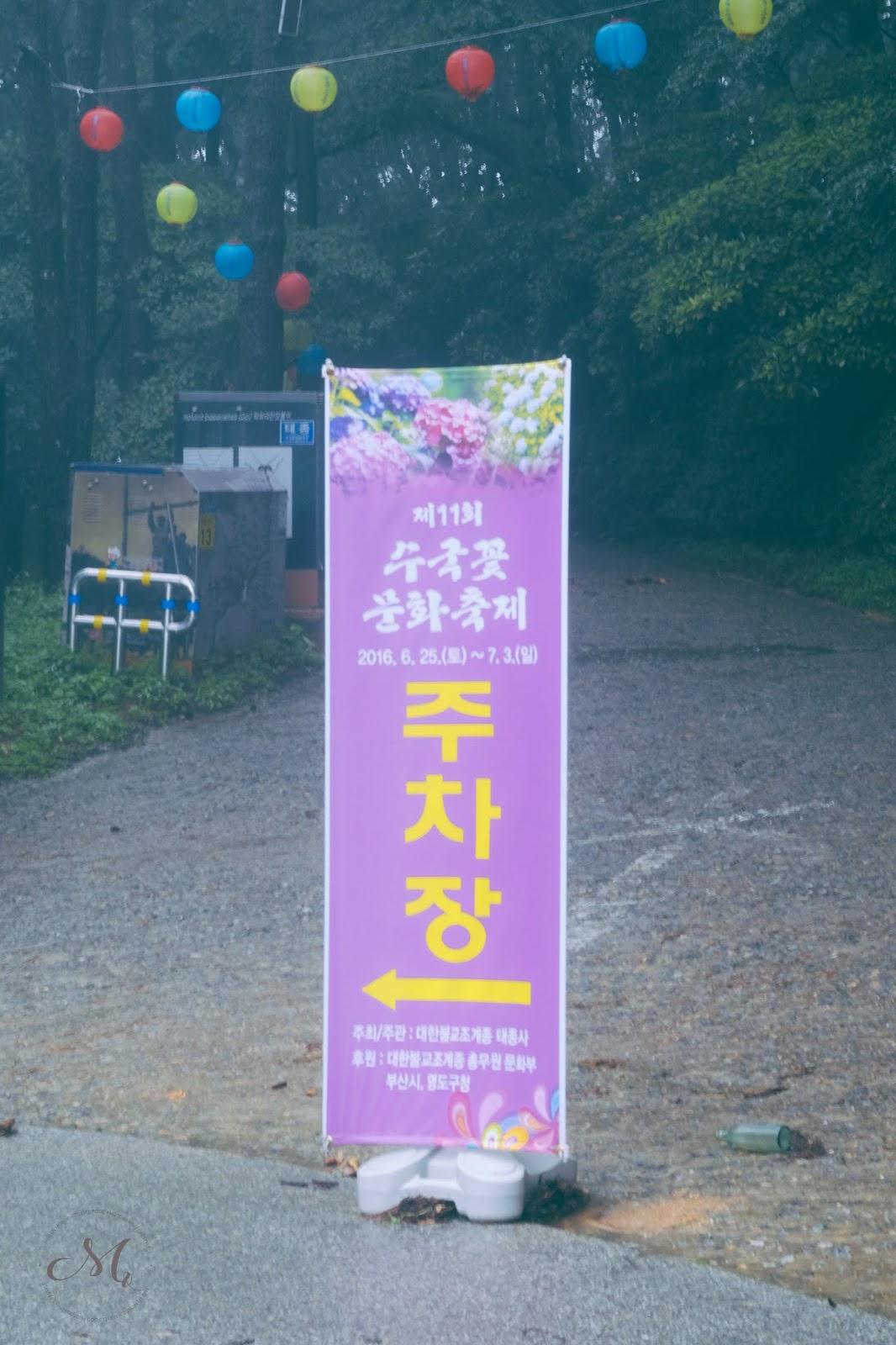 Summer Flower Festival Taejongsa Hydrangea Festival Mini En Monde