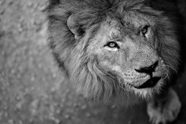 España subvenciona a circos que utilizan animales salvajes en sus actuaciones