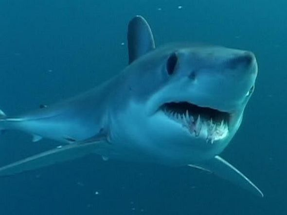 5 tips to help avoid a shark attack